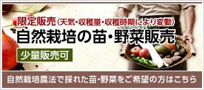期間限定(天気・収穫量・収穫時期により変動) 自然栽培の苗・野菜販売(少量販売可)